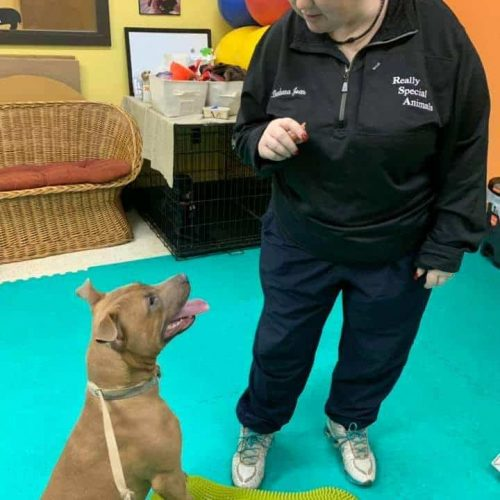 The NH Dog Trainer That Does In Home Dog Training